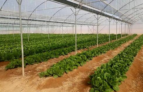 آذربایجان شرقی پیشتاز توسعه گلخانه ها در کشور