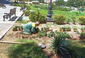 کاشت یک میلیون بوته انواع گل در طرح کاشت پاییزی در تبریز